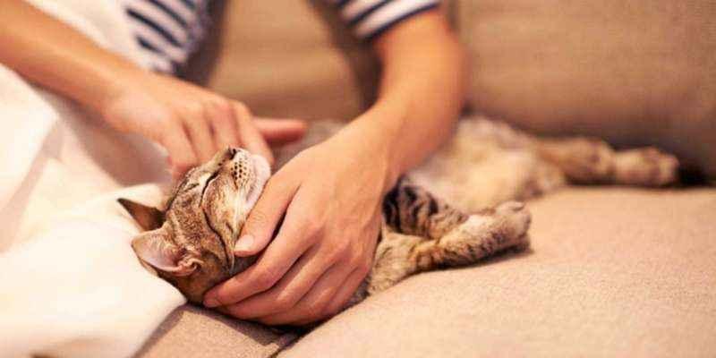pijat kucing
