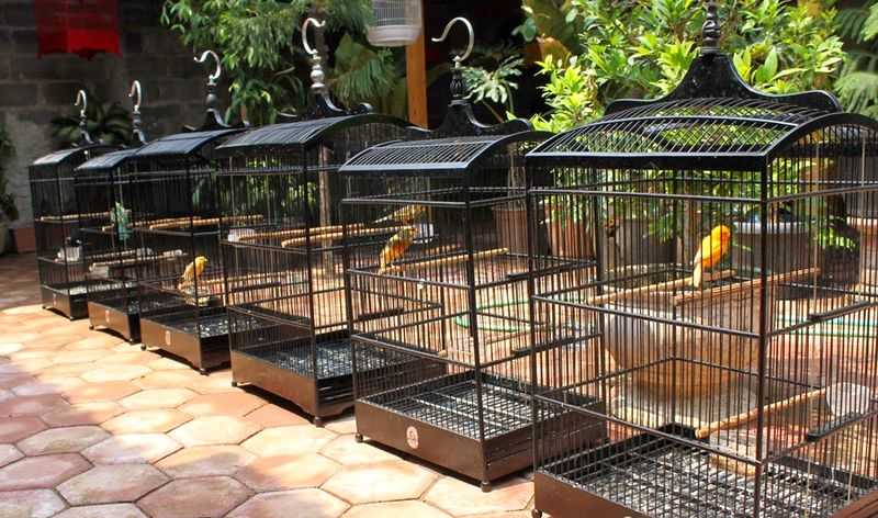 Penjemuran Burung