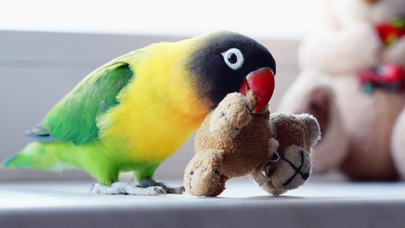 berteman bersama burung