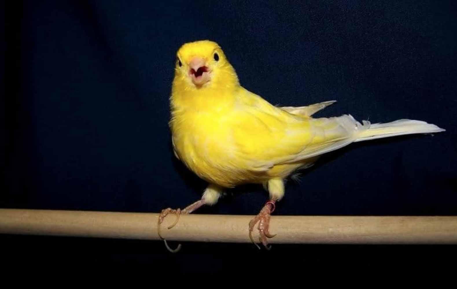 Buat Burung Nyaman