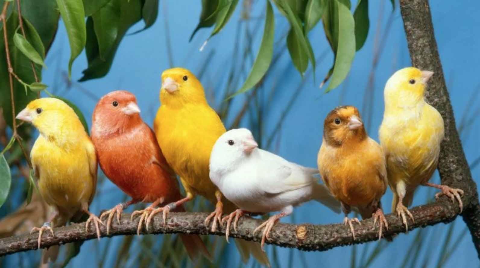 Memelihara Lebih dari Satu Burung
