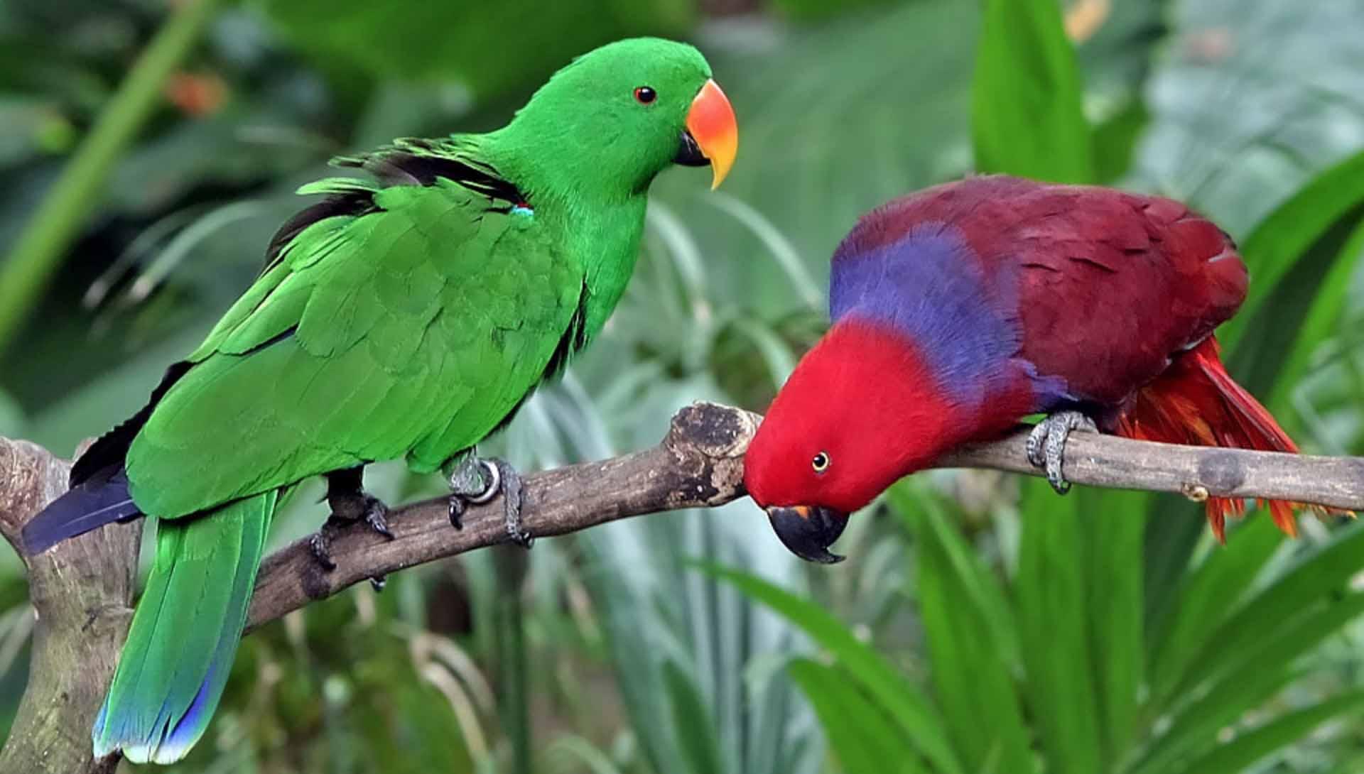 Harga Burung Nuri Bayan