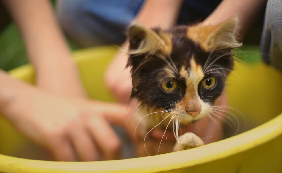 cara memandikan kucing yang takut air