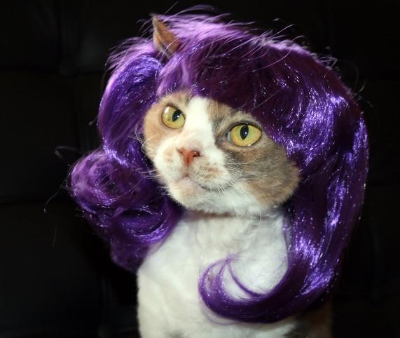shampo kucing kampung