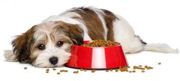 Anjing Tidak Mau Makan