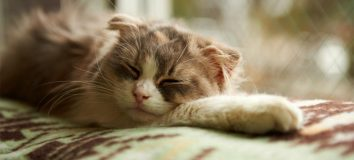 Kucing Tidur Terus