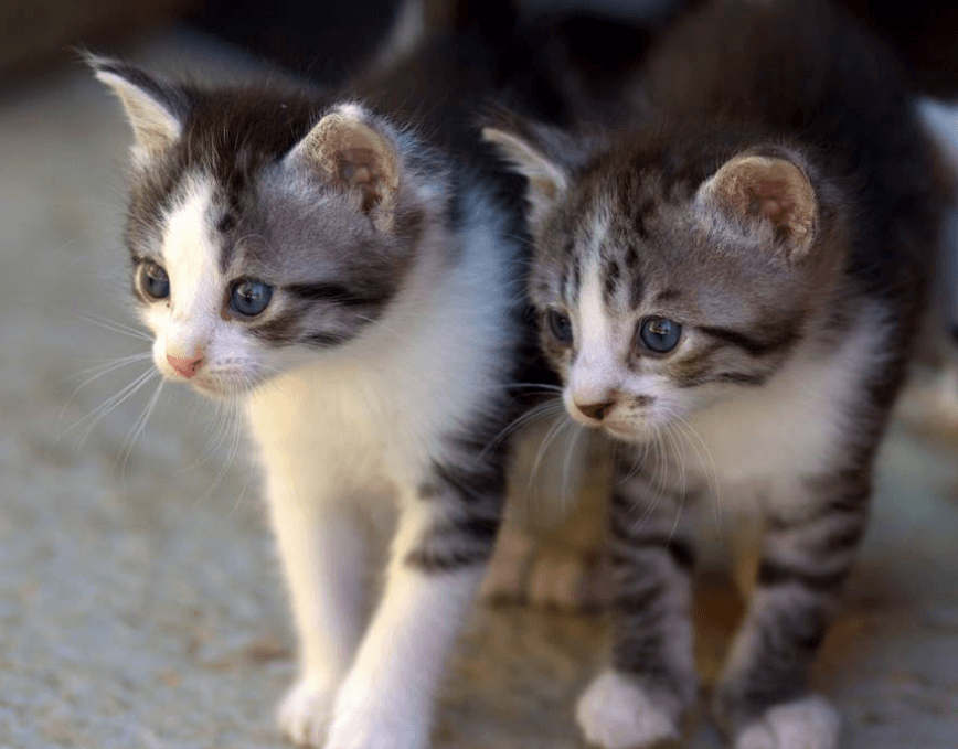 Recognizing the characteristics of cats that are attracted to each other