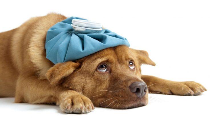 Obat Cacing untuk Anjing