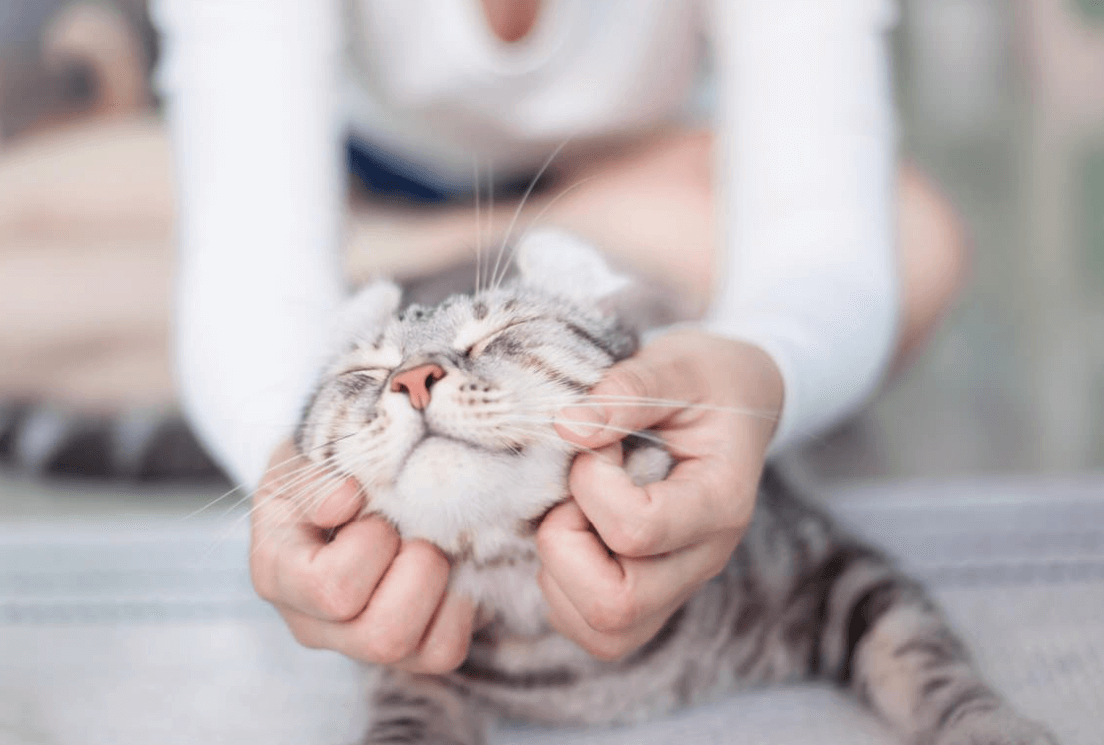 how to deal with skin diseases in kittens