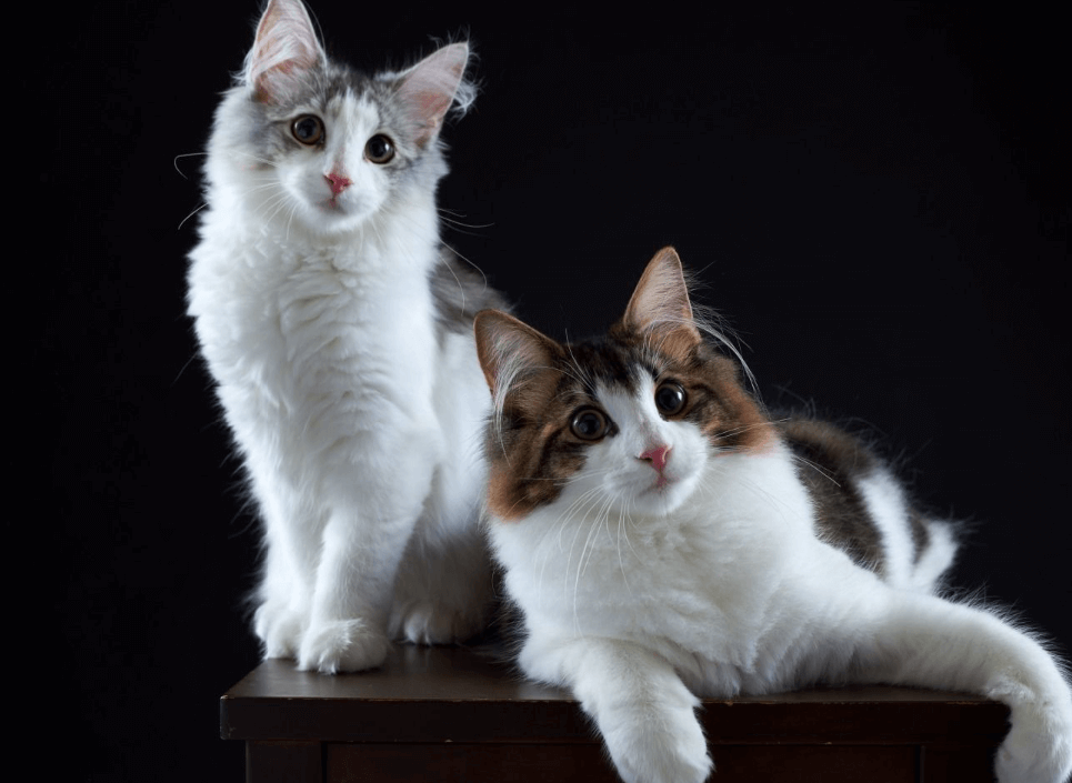 how to marry a cat so that many kittens