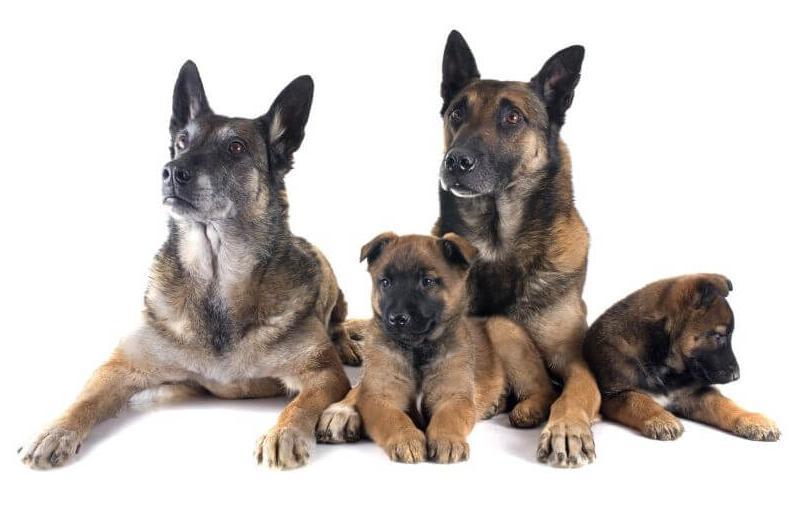 dog cost