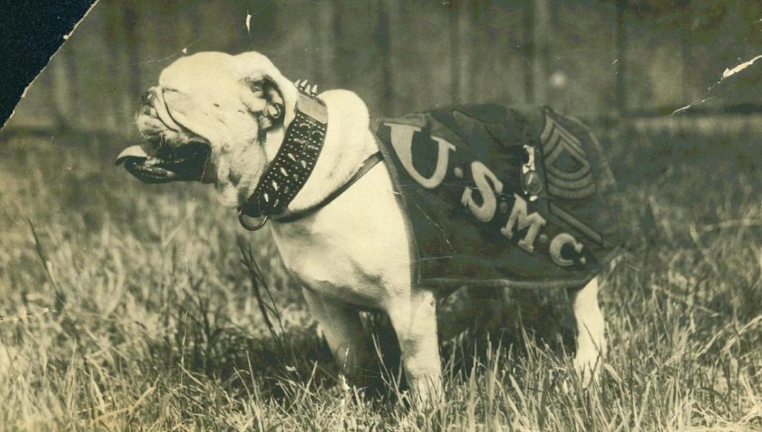 harga anjing bulldog di bali