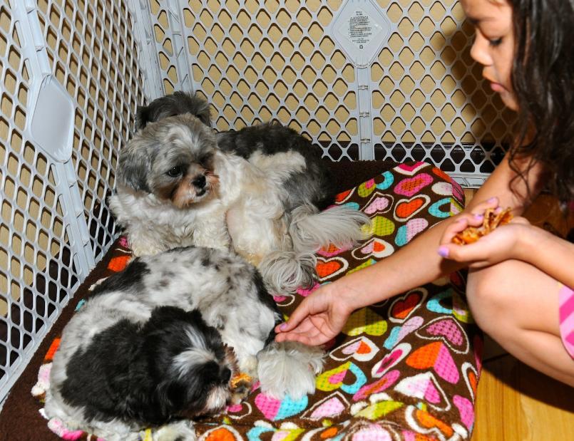 japanese dog grooming