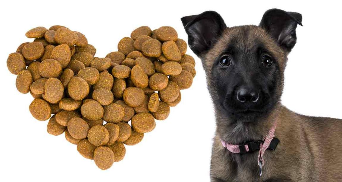 makanan anjing belgian malinois